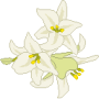white_lilies90x90.png