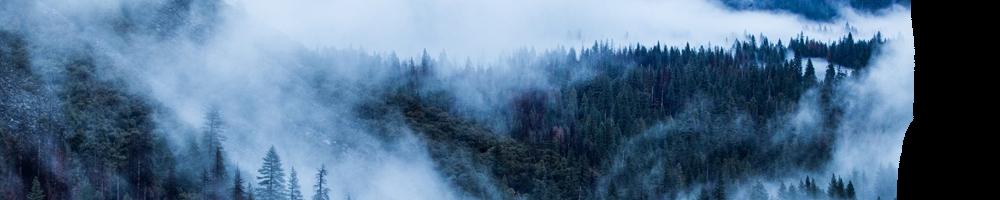 MistyForest.png