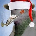 Denis/Pigeon/Gorgeous 🐦#1875