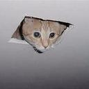 Ceiling Cat#4871