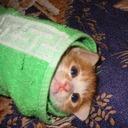 meowlikeadog#3545