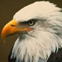 Eagle#1962