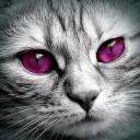 Kittys#6337