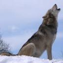 ztechwolf#2562
