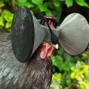 Cockulus Rift#9271