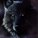 Epic Black Wolf