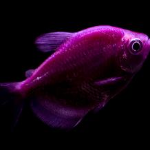 Fishy's Avatar