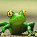 FrogBot v.4