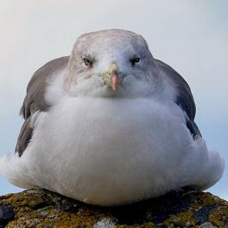 (SF) Seagull's Avatar