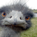 Emu Bot