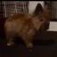 Conejo Pollo Frodo