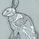 BonesTheRabbit#6185