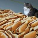 Hotdog Cat#9301