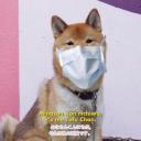 Tofu Chan (◕ᴗ◕✿)#8753's avatar