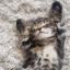 Kitten bot