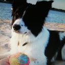 Emotional Support Puppy#8601