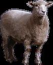 Emoji for sheeppl