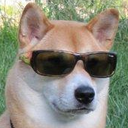 cooldoggo