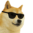 Cooldoge