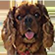 Emoji for franti9Tango