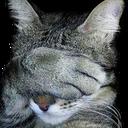 :Catfacepalm: Discord Emote