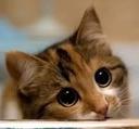 :kitty1: Discord Emote