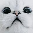 Emoji for mieowoah