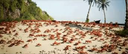 Emoji for crabrave
