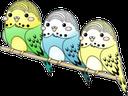 Emoji for birbs