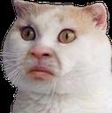 :CAT_HuhCat: Discord Emote