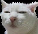 :CAT_Hmmm: Discord Emote