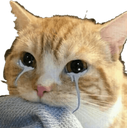 :CAT_CryingCat: Discord Emote