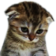 Emoji for sadcat