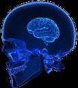 brainlet