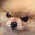 Emoji for dogAngery