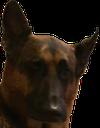 foxbot_dog
