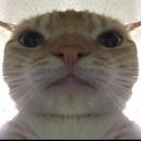 :cat: Discord Emote