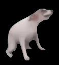 dog_dance