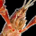 :crayfish: Discord Emote