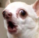 screamingdog