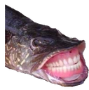 Emoji for novasgiantfishtoe