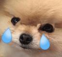 crydog