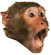 :MonkeyLul: Discord Emote