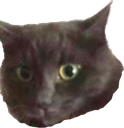 Emoji for auracat