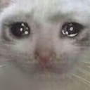 :CryingCat: Discord Emote