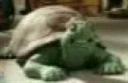 turtlepersian