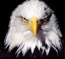 :USAMuricanEagle: Discord Emote