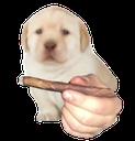 :bluntdog: Discord Emote
