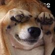 Emoji for dogNotLike