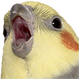 Emoji for birbo